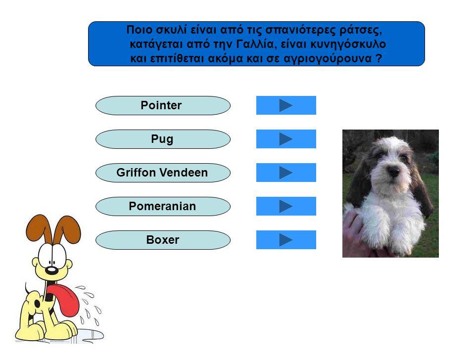 Ποιο σκυλί είναι από τις σπανιότερες ράτσες,
