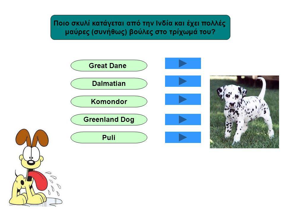 Ποιο σκυλί κατάγεται από την Ινδία και έχει πολλές