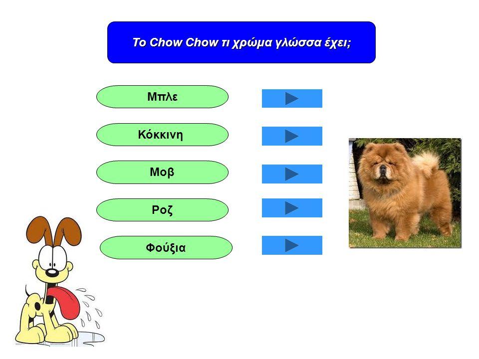 Το Chow Chow τι χρώμα γλώσσα έχει;
