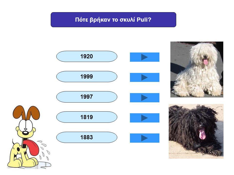 Πότε βρήκαν το σκυλί Puli