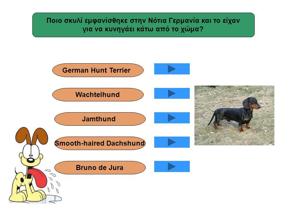Ποιο σκυλί εμφανίσθηκε στην Νότια Γερμανία και το είχαν