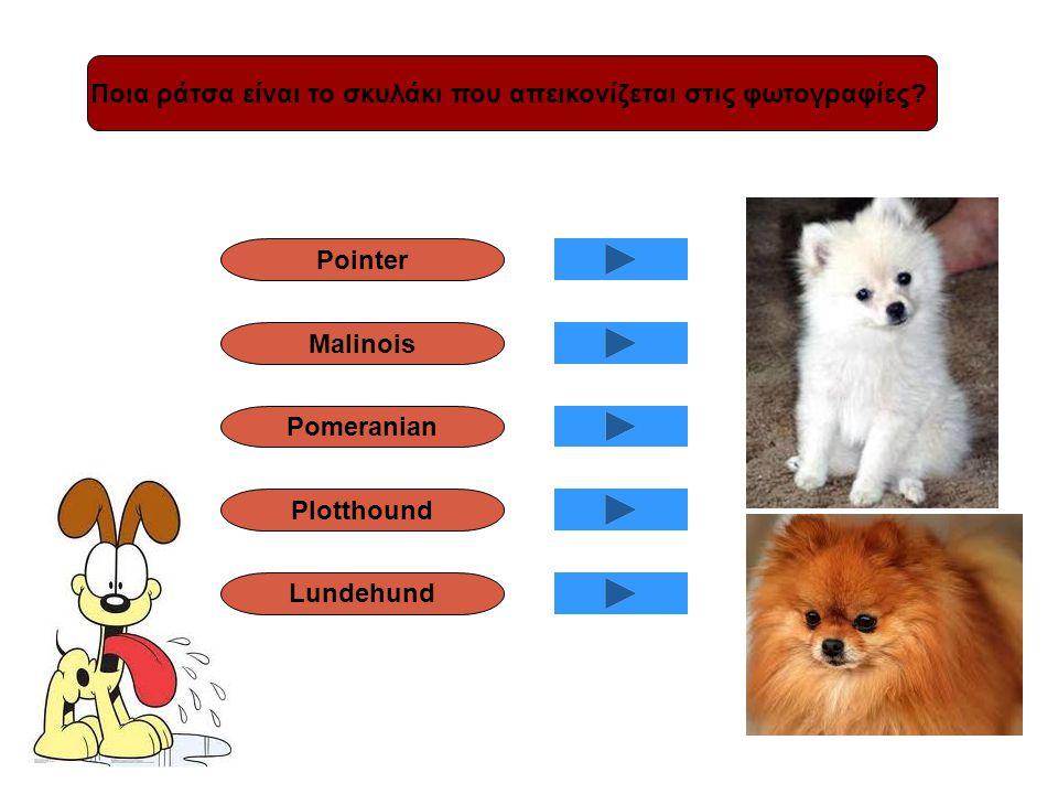 Ποια ράτσα είναι το σκυλάκι που απεικονίζεται στις φωτογραφίες