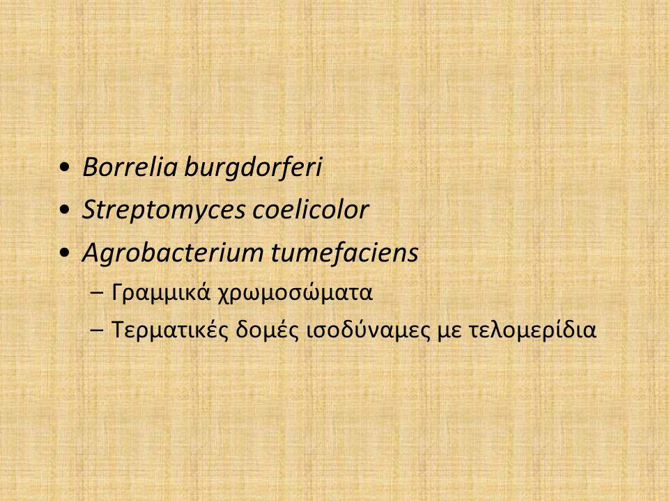 Streptomyces coelicolor Agrobacterium tumefaciens