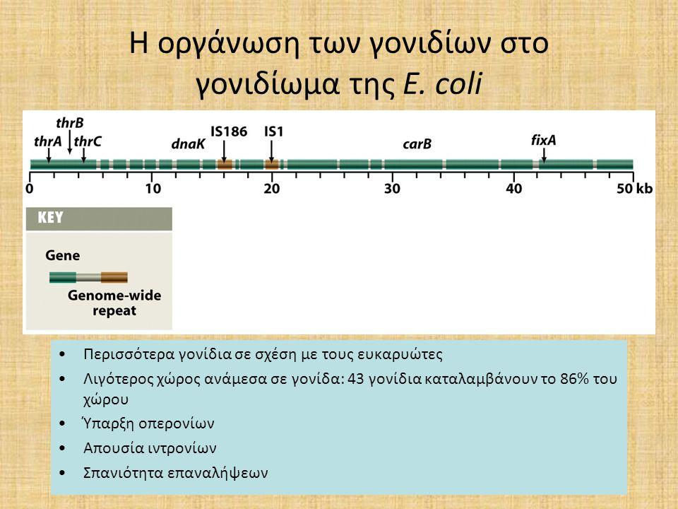 Η οργάνωση των γονιδίων στο γονιδίωμα της E. coli