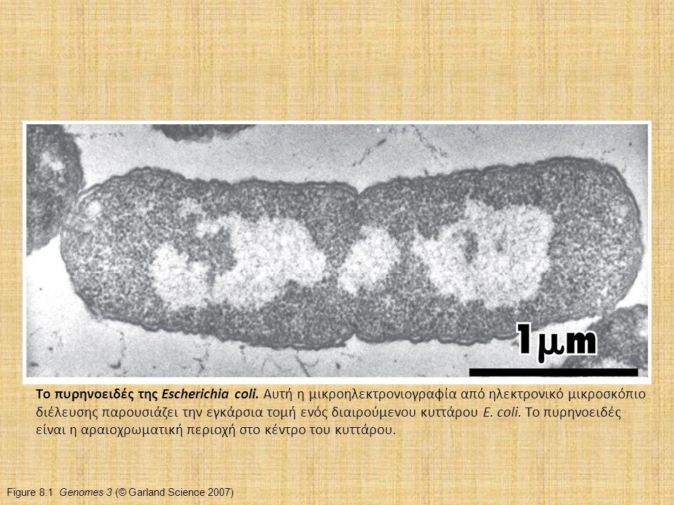 Το πυρηνοειδές της Escherichia coli