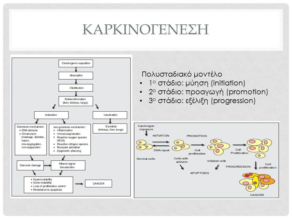 καρκινογενεςη Πολυσταδιακό μοντέλο 1ο στάδιο: μύηση (initiation)