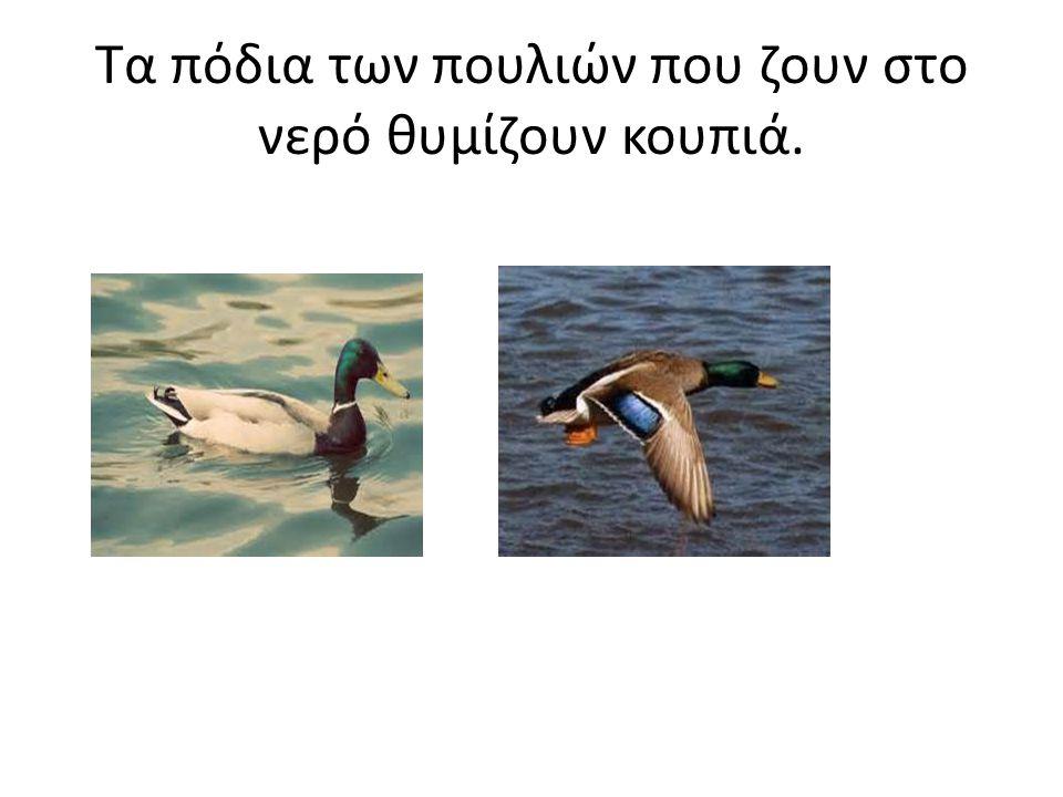 Τα πόδια των πουλιών που ζουν στο νερό θυμίζουν κουπιά.