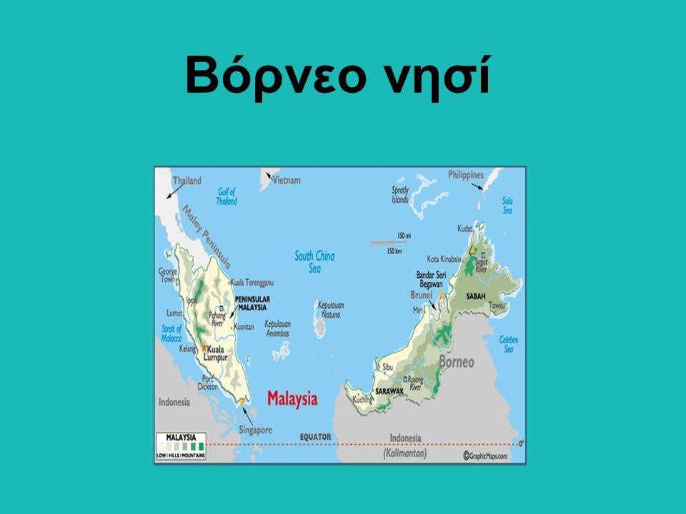 Βόρνεο νησί