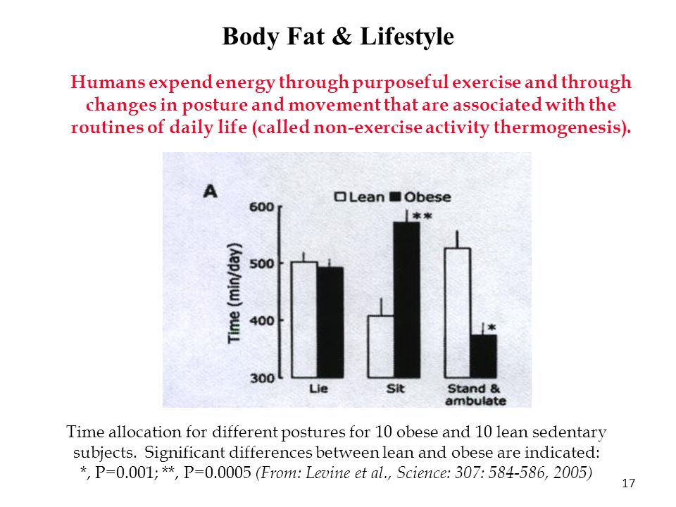 Body Fat & Lifestyle