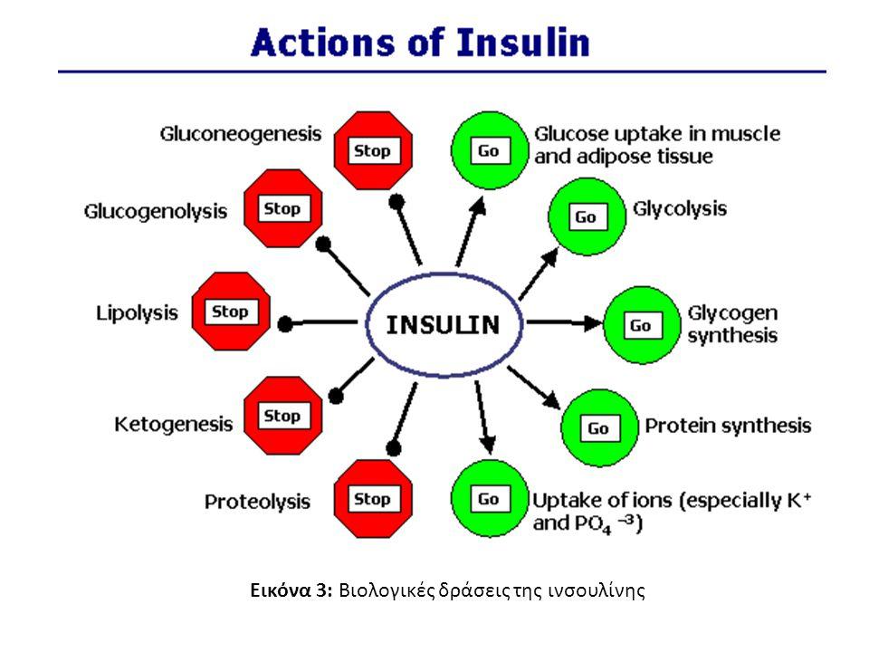 Εικόνα 3: Βιολογικές δράσεις της ινσουλίνης