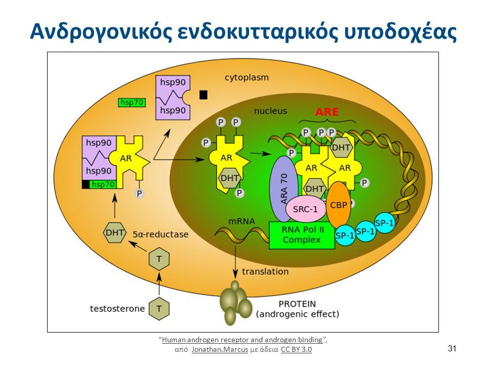 Proteinsynthesis , από Laikayiu με άδεια CC BY-SA 3.0