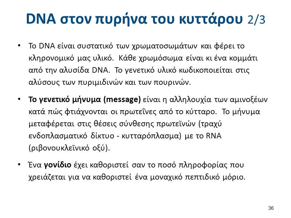 DNA στον πυρήνα του κυττάρου 3/3