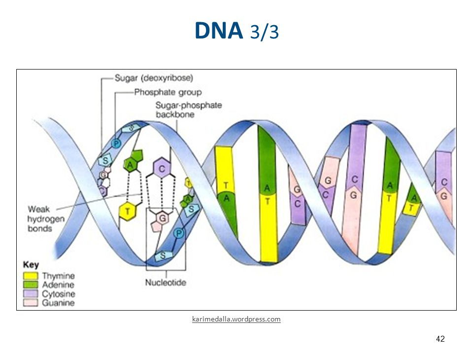 Difference DNA RNA-EN , από Sponk με άδεια CC BY-SA 3.0