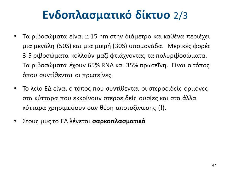 Ενδοπλασματικό δίκτυο 3/3