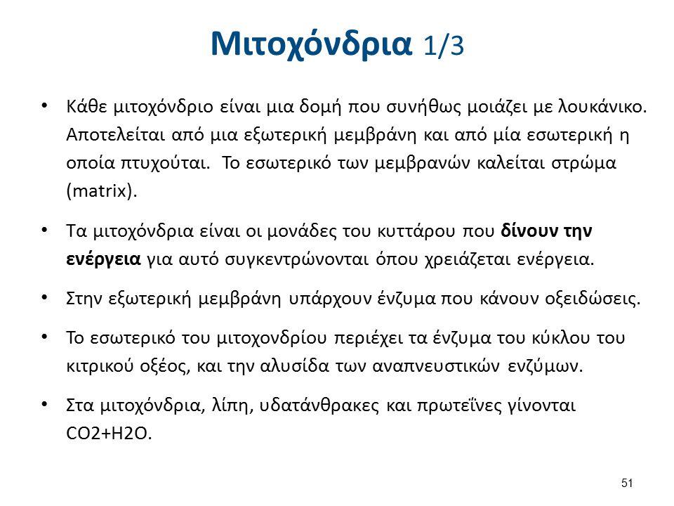 Mitochondrie , από Tatoute με άδεια CC BY-SA 3.0
