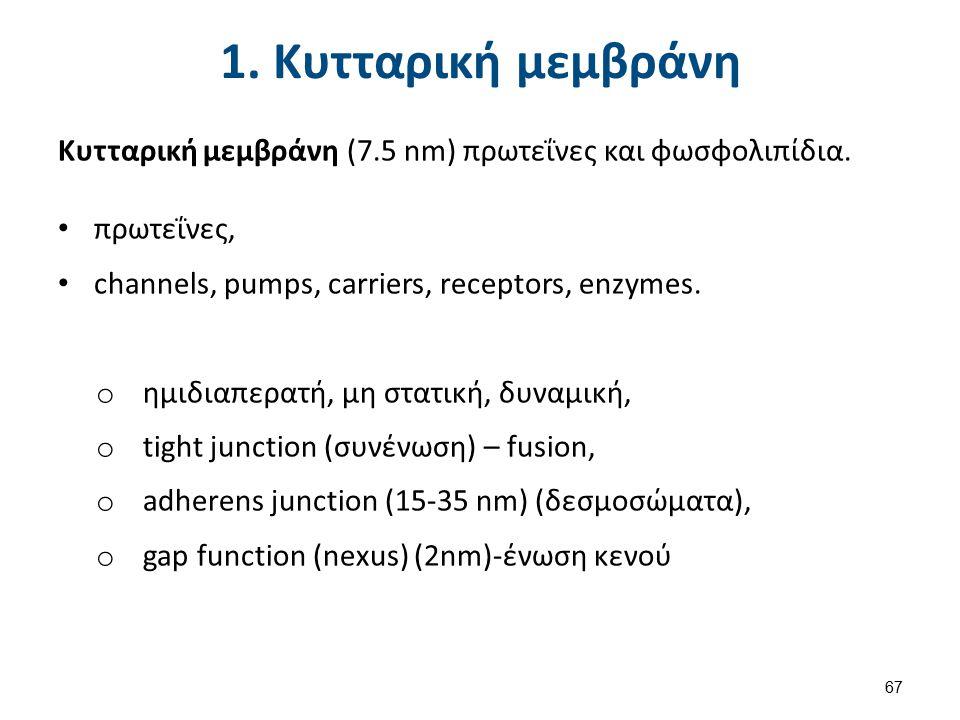 2. Πυρήνας και δομές Πυρήνας (+ και δομές) στα διαιρετά κύτταρα.