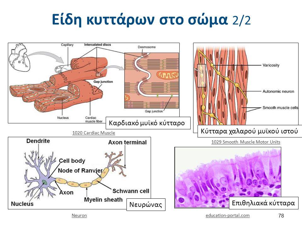 Red blood cells illustration , από Fæ διαθέσιμο ως κοινό κτήμα