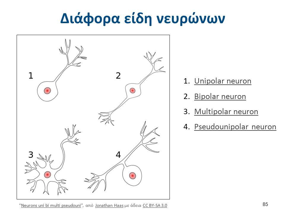 Τυπικός μεγάλος νευρώνας