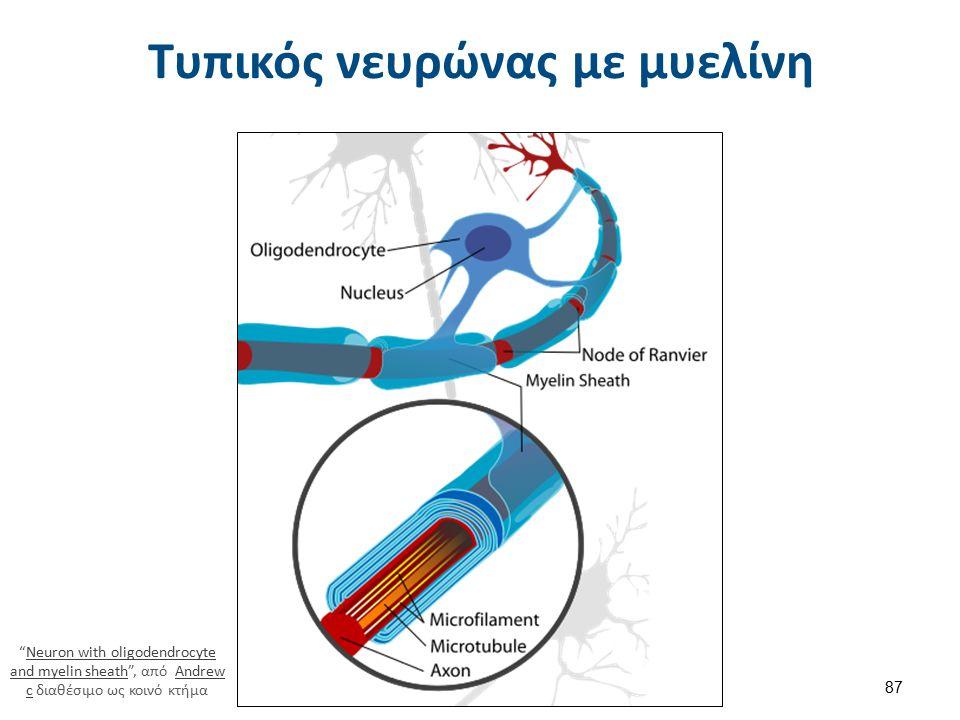 Εξωκυττάριο υγρό 1/2 Το ενδιάμεσο υγρό είναι εκείνο το μέρος του ΕCF που βρίσκεται έξω από το αγγειακό σύστημα και διαβρέχει τα κύτταρα.