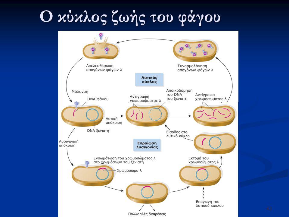 Ο κύκλος ζωής του φάγου