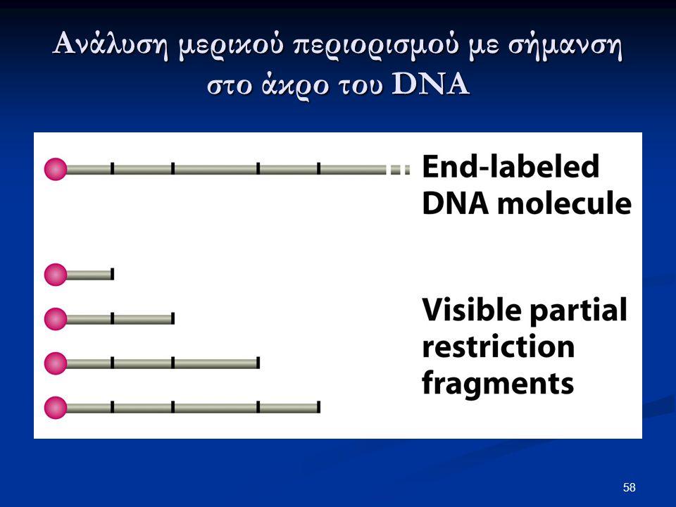 Ανάλυση μερικού περιορισμού με σήμανση στο άκρο του DNA