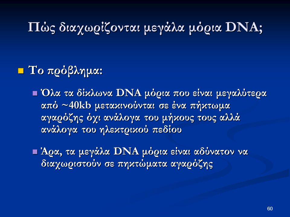 Πώς διαχωρίζονται μεγάλα μόρια DNA;