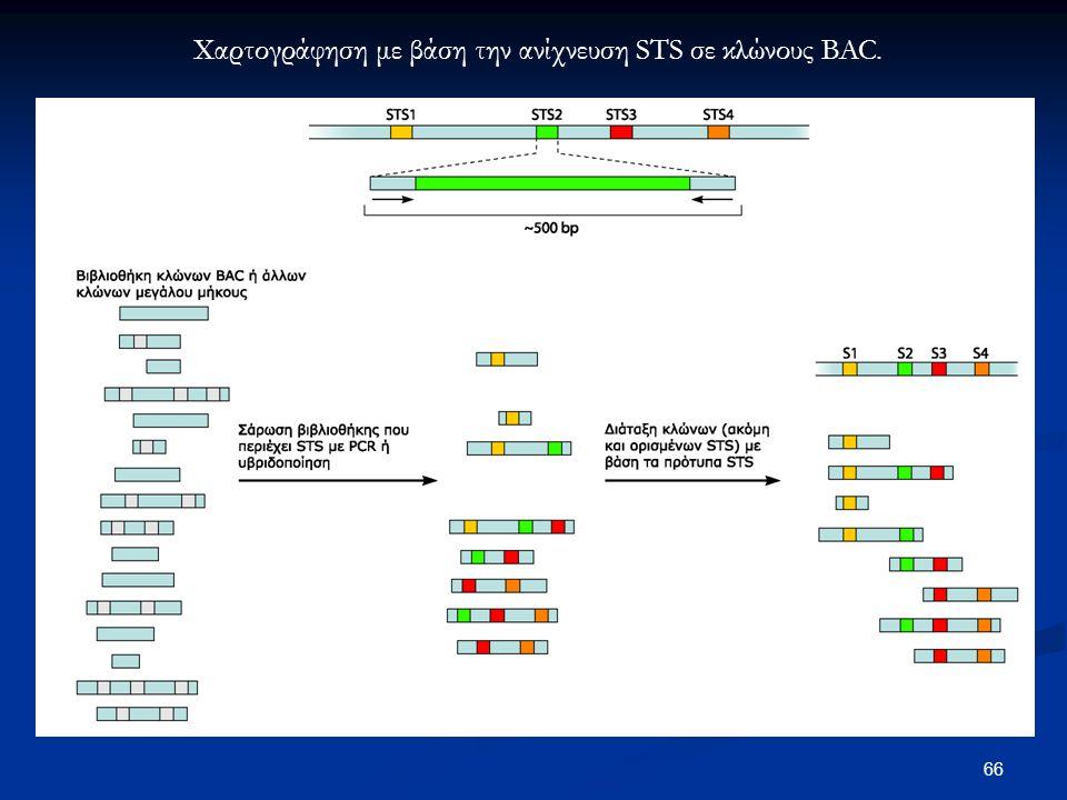 Χαρτογράφηση με βάση την ανίχνευση STS σε κλώνους BAC.