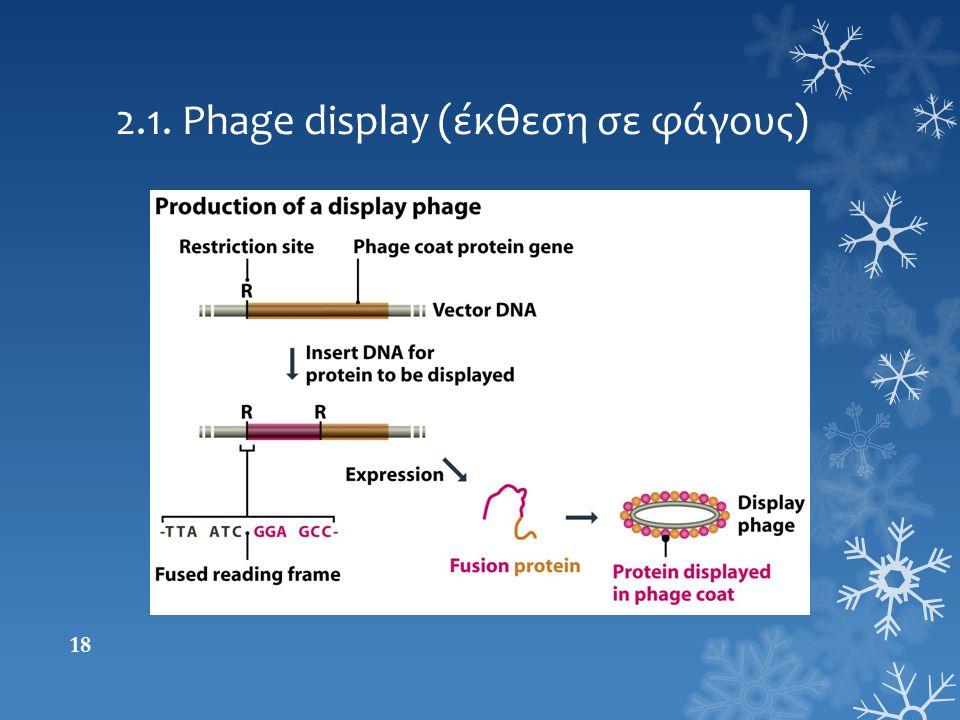 2.1. Phage display (έκθεση σε φάγους)