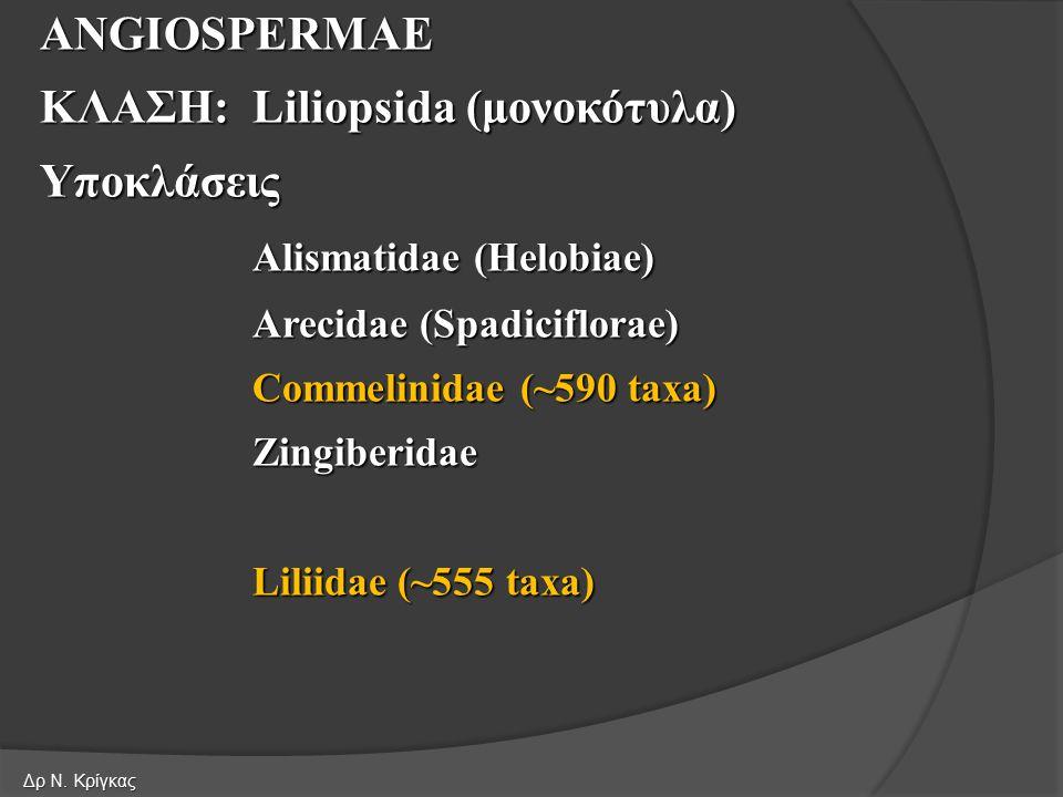 ΚΛΑΣΗ: Liliopsida (μονοκότυλα) Υποκλάσεις Alismatidae (Helobiae)