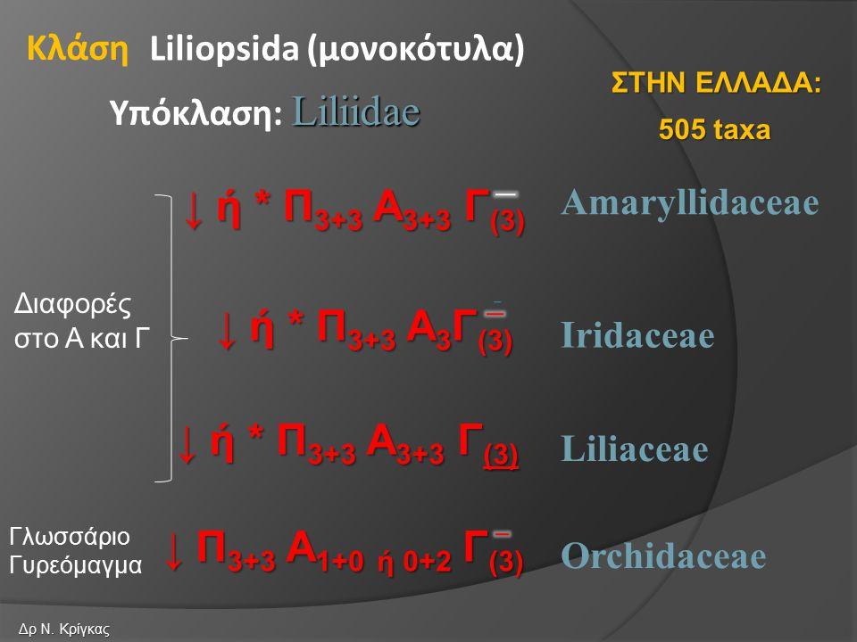 ↓ ή * Π3+3 Α3+3 Γ(3) ↓ ή * Π3+3 Α3Γ(3) ↓ ή * Π3+3 Α3+3 Γ(3)
