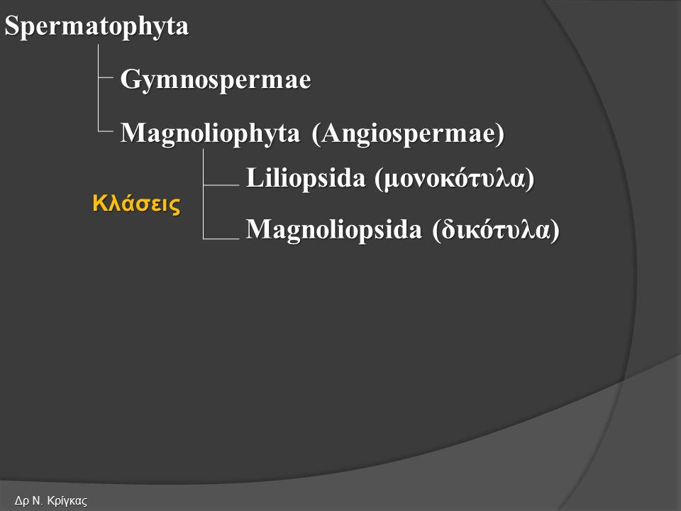 Magnoliophyta (Angiospermae)
