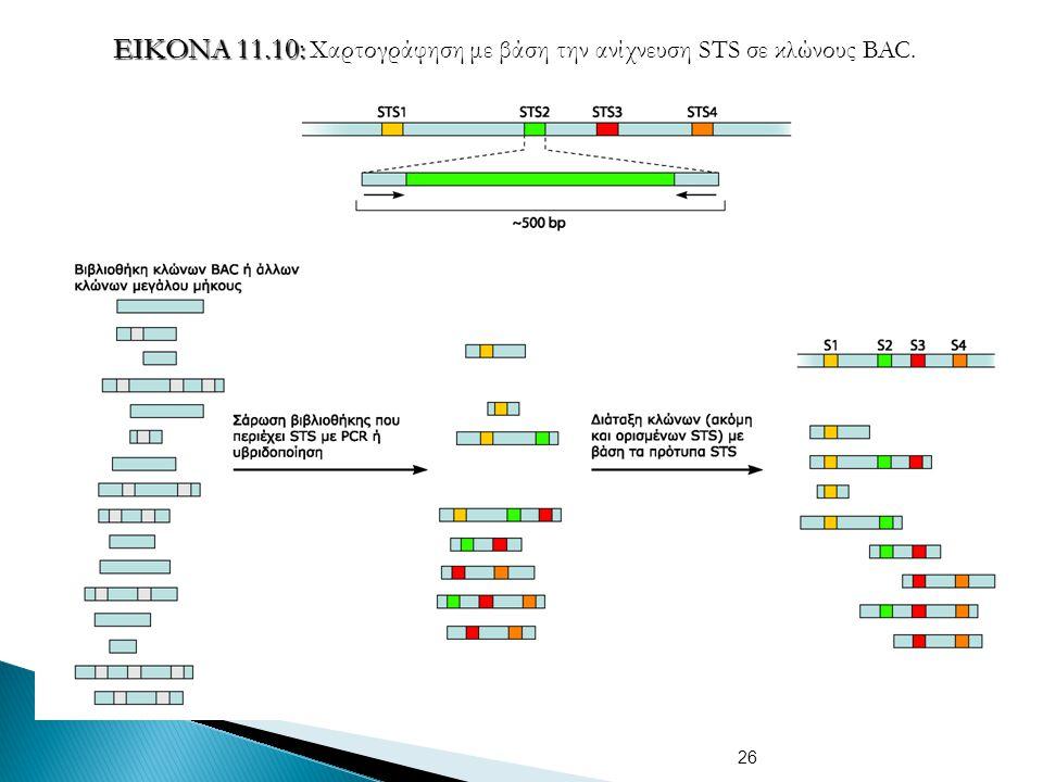 ΕΙΚΟΝΑ 11.10: Χαρτογράφηση με βάση την ανίχνευση STS σε κλώνους BAC.