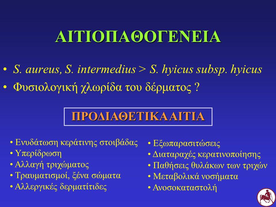 ΑΙΤΙΟΠΑΘΟΓΕΝΕΙΑ S. aureus, S. intermedius > S. hyicus subsp. hyicus
