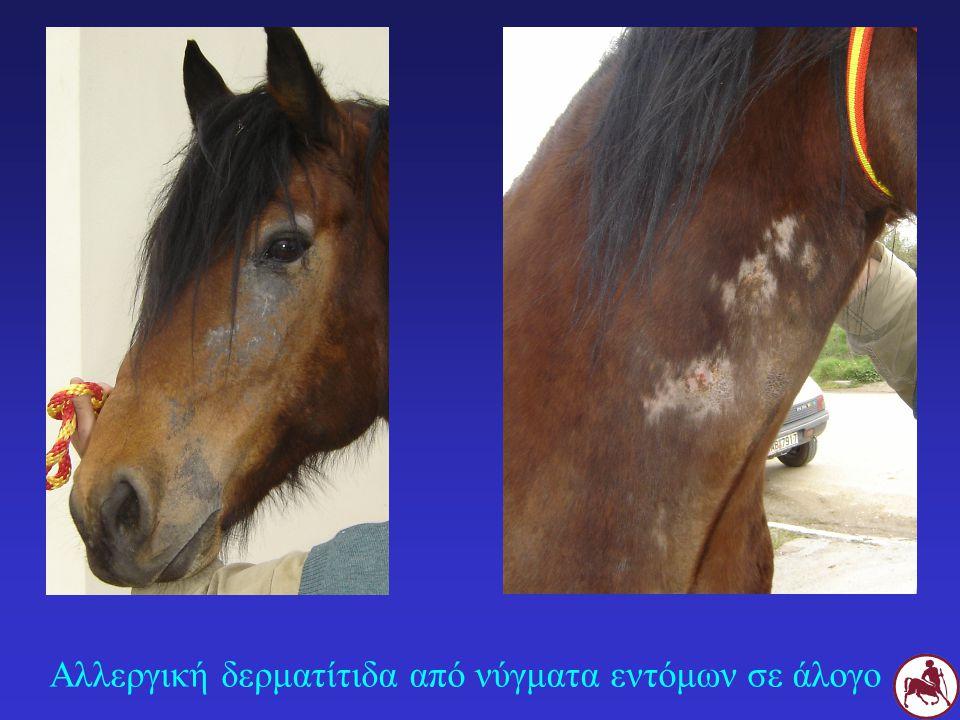 Αλλεργική δερματίτιδα από νύγματα εντόμων σε άλογο