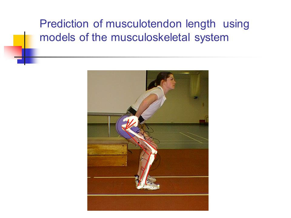 Prediction of musculotendon length using models of the musculoskeletal system