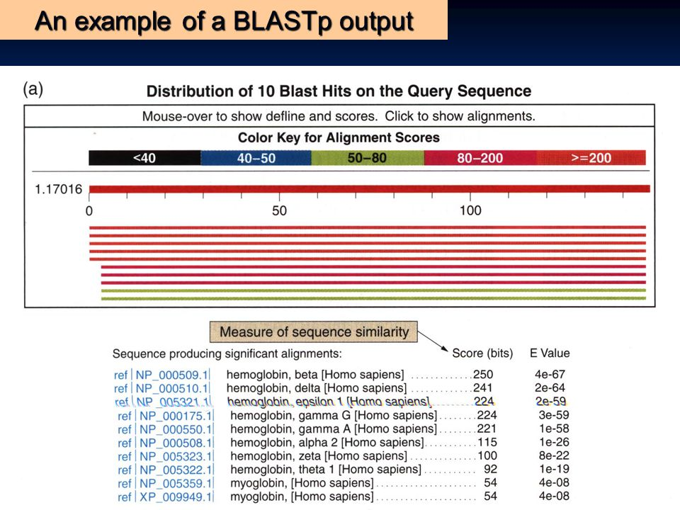 An example of a BLASTp output