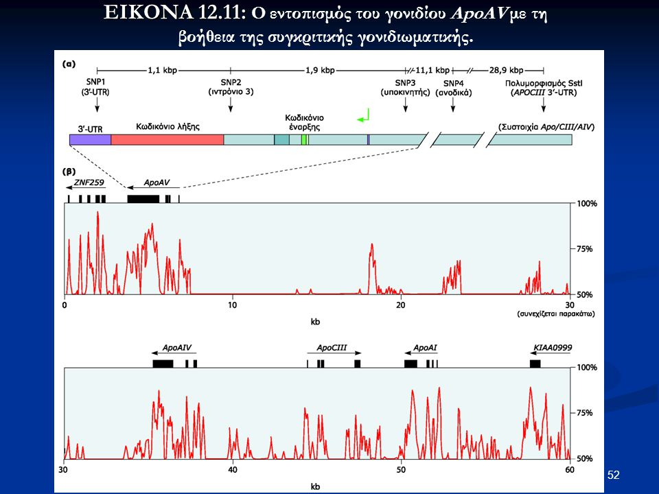 ΕΙΚΟΝΑ 12.11: Ο εντοπισμός του γονιδίου ApoAV με τη βοήθεια της συγκριτικής γονιδιωματικής.