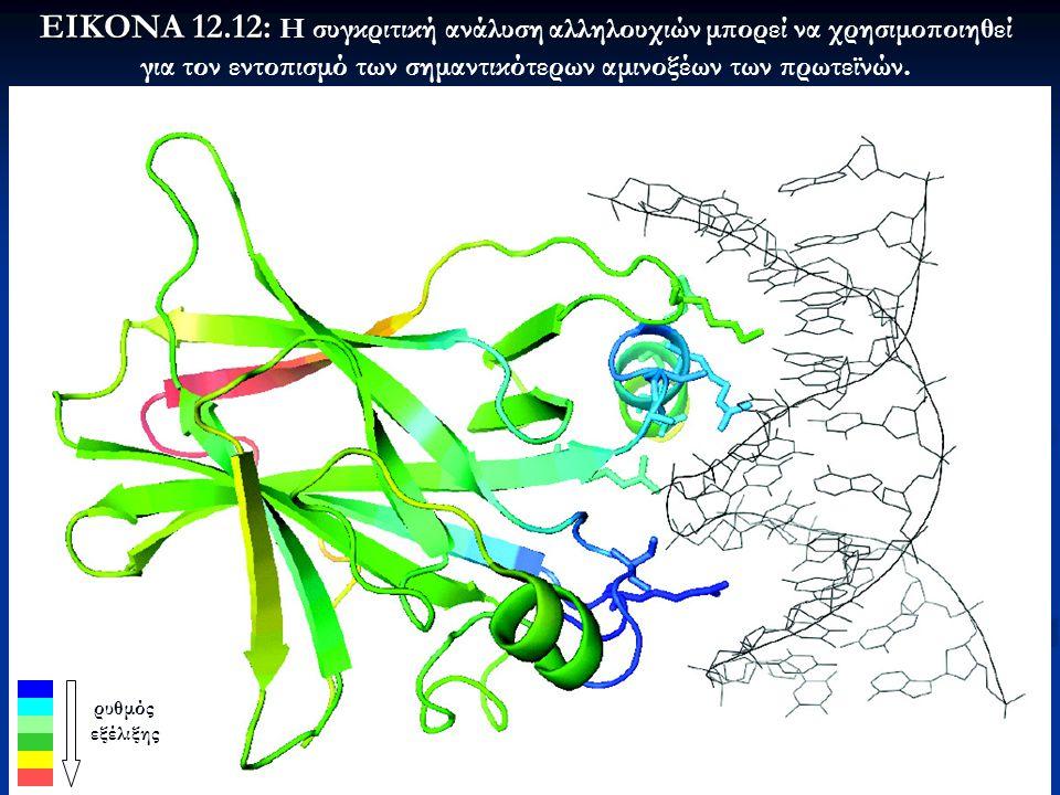 ΕΙΚΟΝΑ 12.12: Η συγκριτική ανάλυση αλληλουχιών μπορεί να χρησιμοποιηθεί για τον εντοπισμό των σημαντικότερων αμινοξέων των πρωτεϊνών.