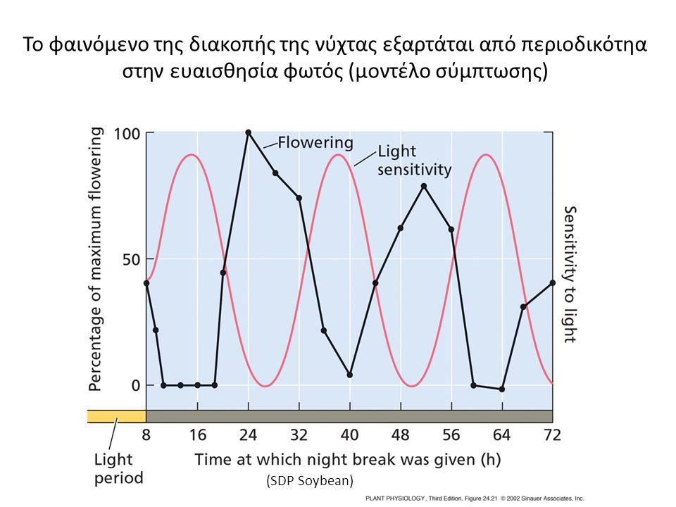 Το φαινόμενο της διακοπής της νύχτας εξαρτάται από περιοδικότηα στην ευαισθησία φωτός (μοντέλο σύμπτωσης)