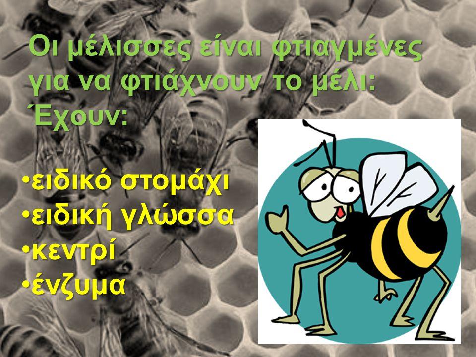 Οι μέλισσες είναι φτιαγμένες για να φτιάχνουν το μέλι: Έχουν:
