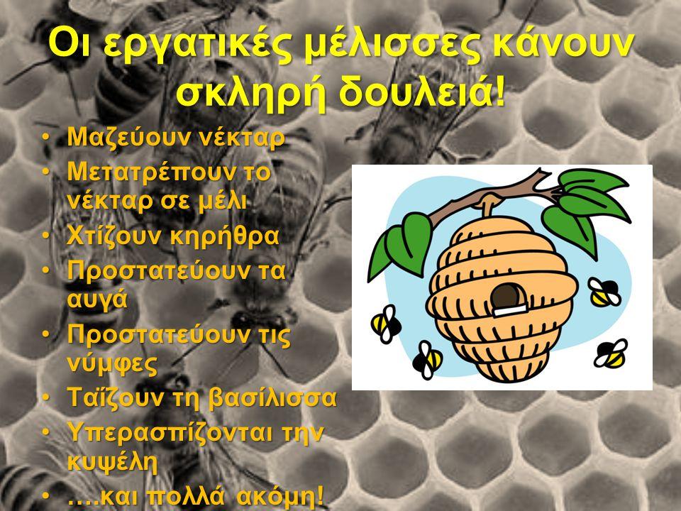 Οι εργατικές μέλισσες κάνουν σκληρή δουλειά!