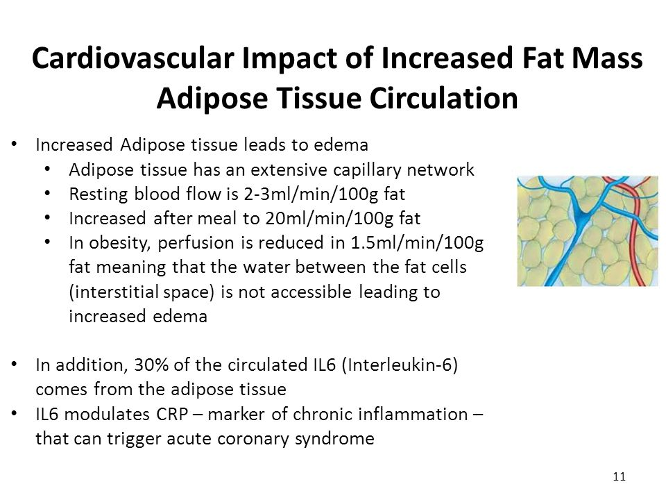 Cardiovascular Impact of Increased Fat Mass Adipose Tissue Circulation