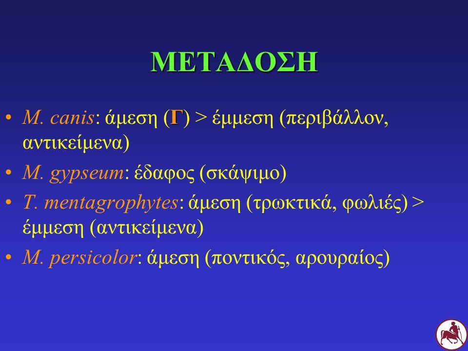 ΜΕΤΑΔΟΣΗ M. canis: άμεση (Γ) > έμμεση (περιβάλλον, αντικείμενα)