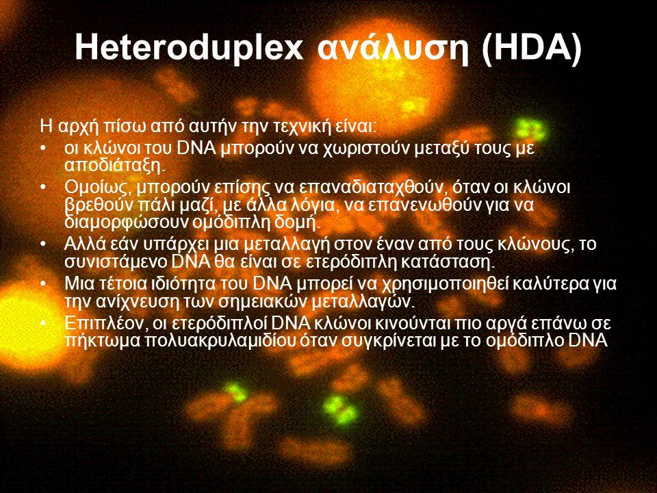 Heteroduplex ανάλυση (HDA)