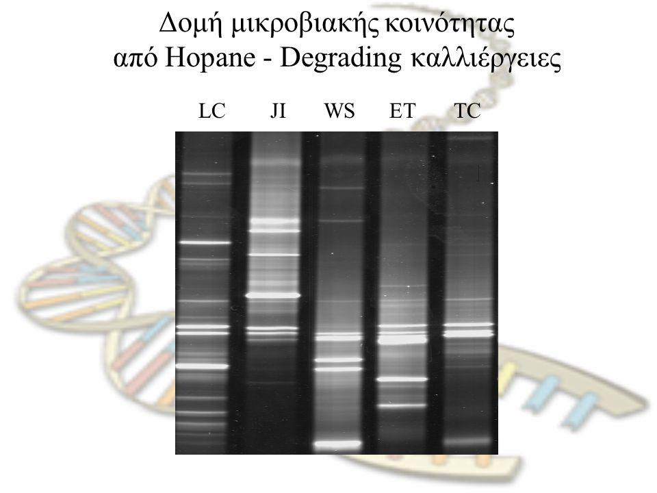 Δομή μικροβιακής κοινότητας από Hopane - Degrading καλλιέργειες