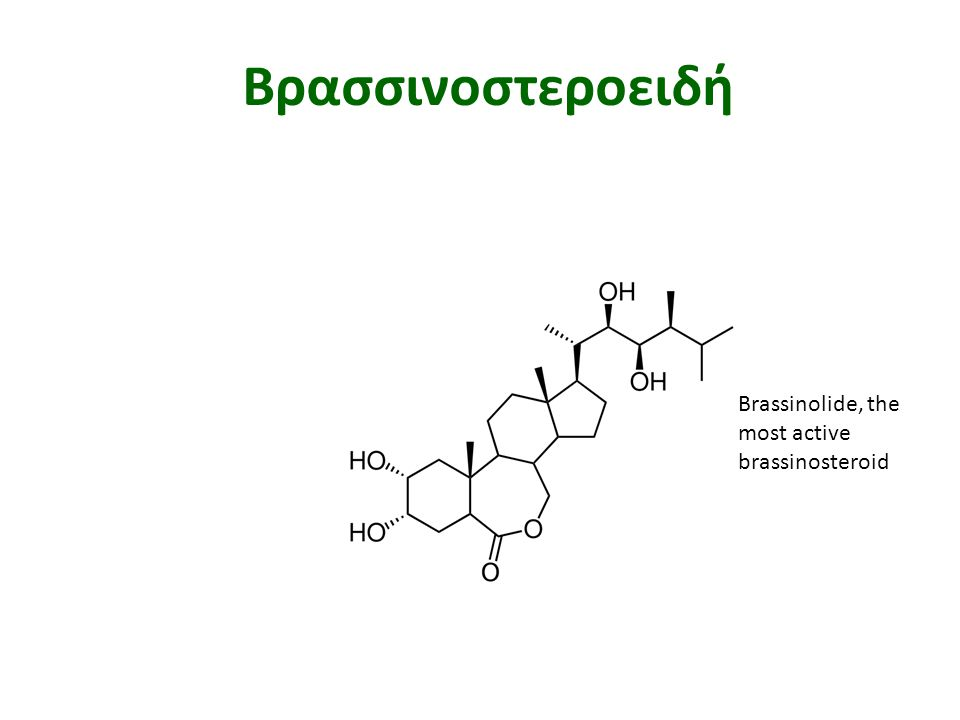 Βρασσινοστεροειδή Brassinolide, the most active brassinosteroid