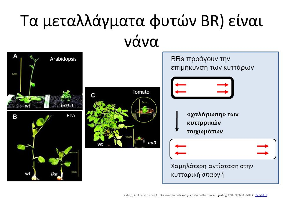 Τα μεταλλάγματα φυτών BR) είναι νάνα