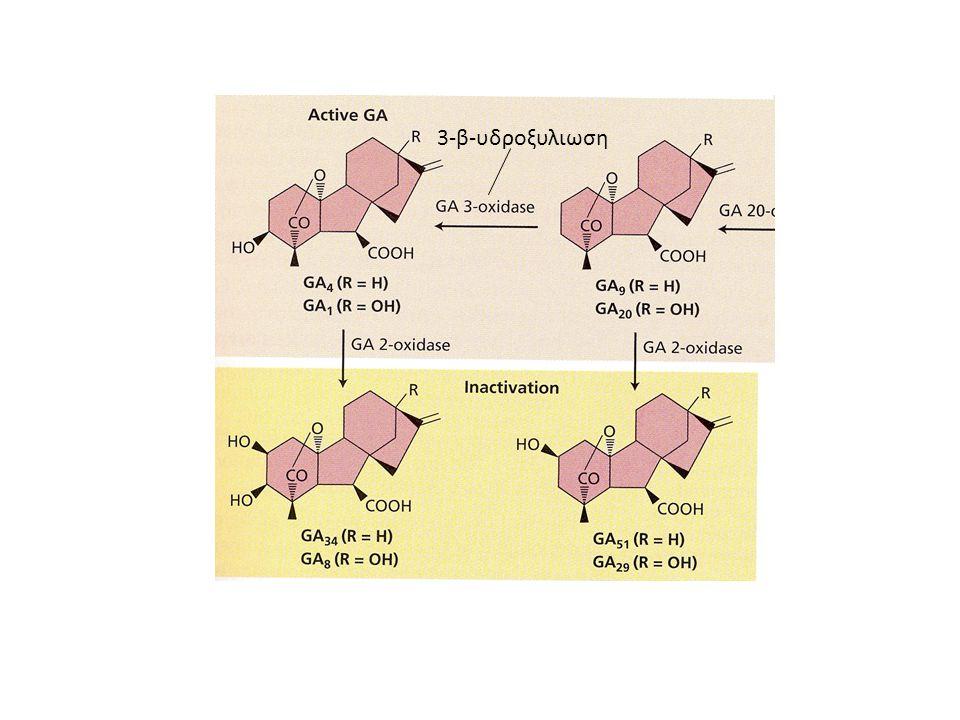 3-β-υδροξυλιωση