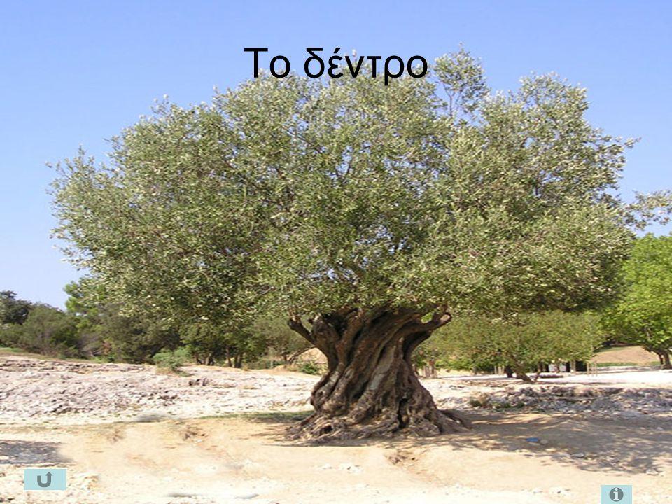 Το δέντρο