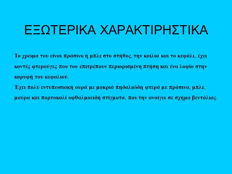 ΕΞΩΤΕΡΙΚΑ ΧΑΡΑΚΤΙΡΗΣΤΙΚΑ